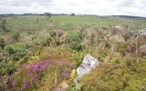 Lande sèche sur affleurement rocheux © PNRA
